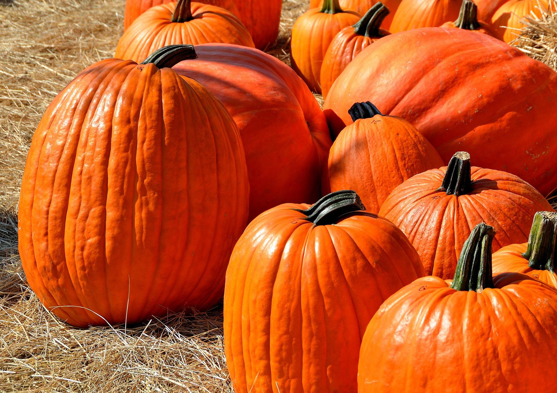 Halloween in the Okanagan