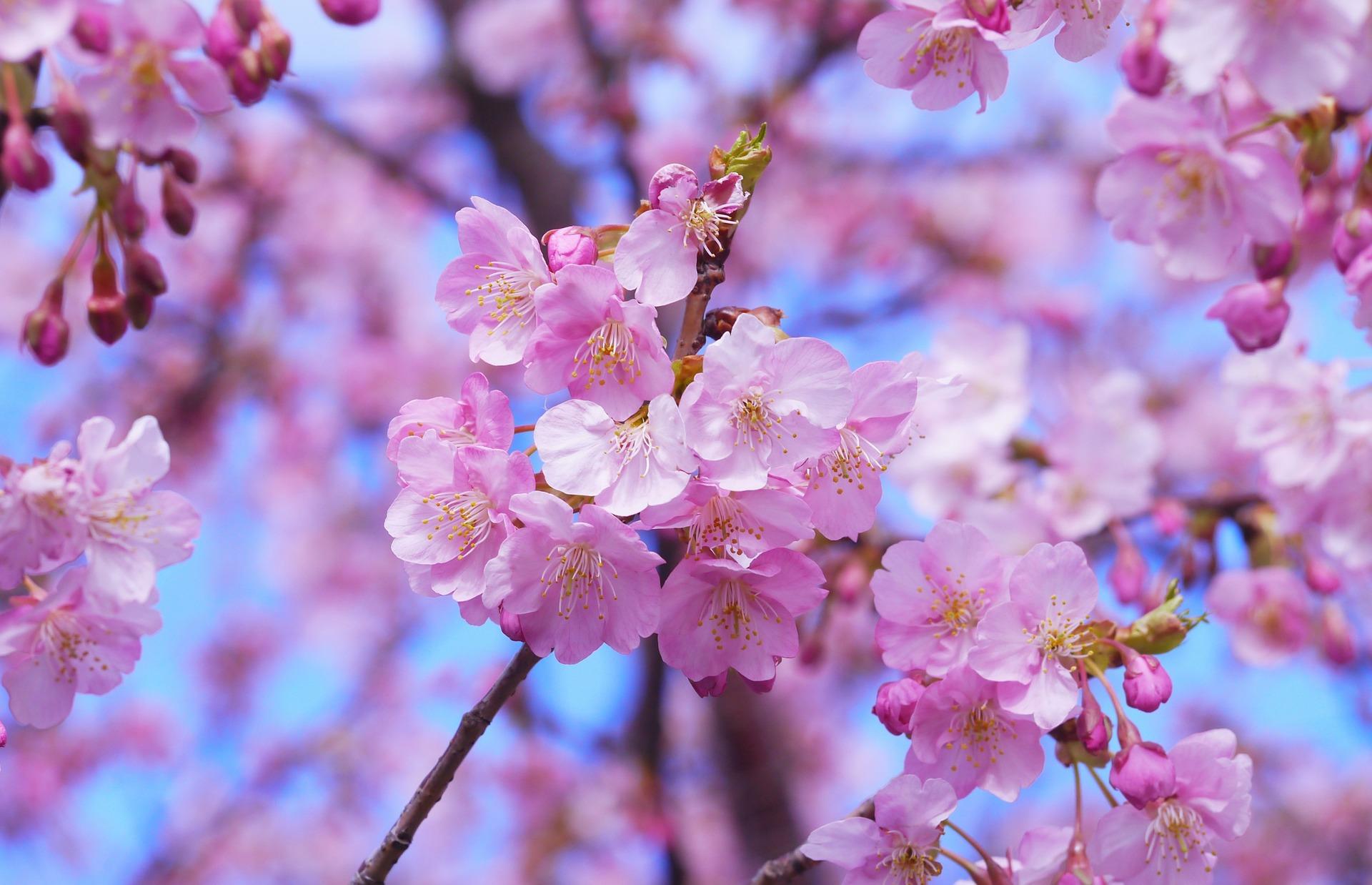 Blossoms In The Okanagan La Casa Cottages