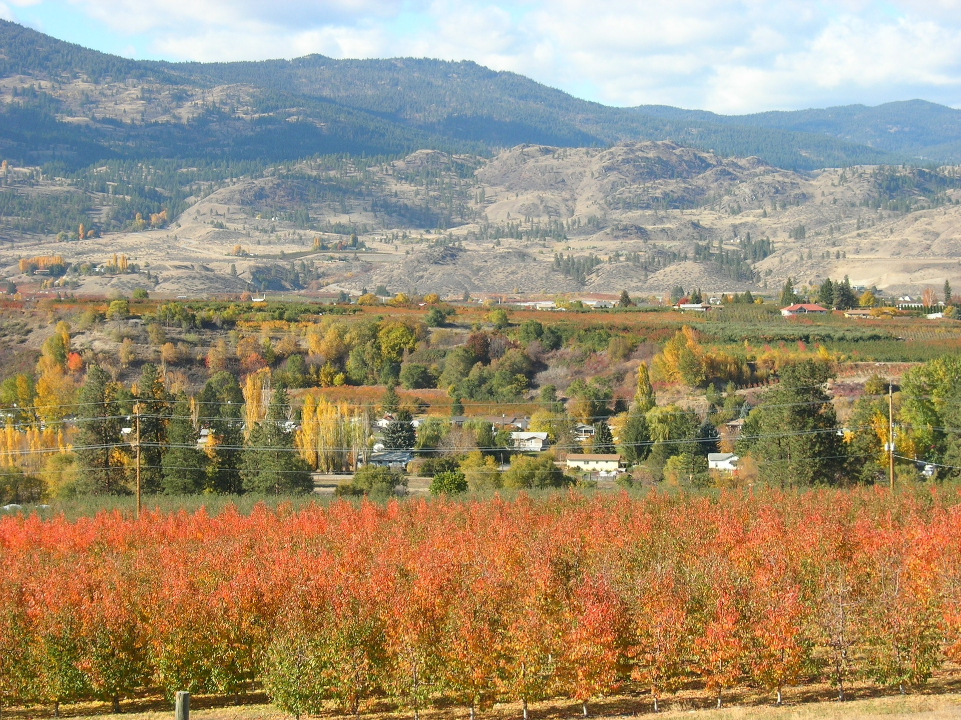 Okanagan wine vineyard