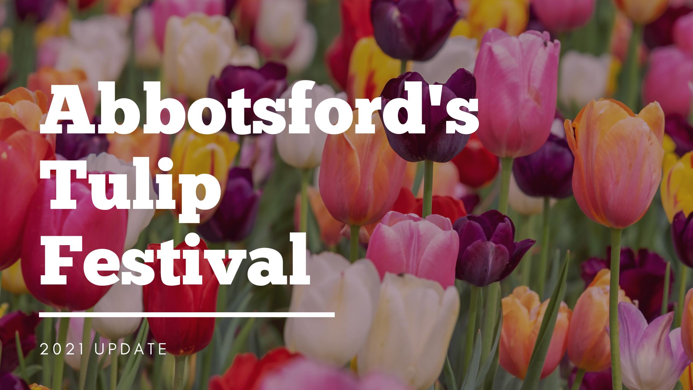 Abbotsford's Tulip Festival